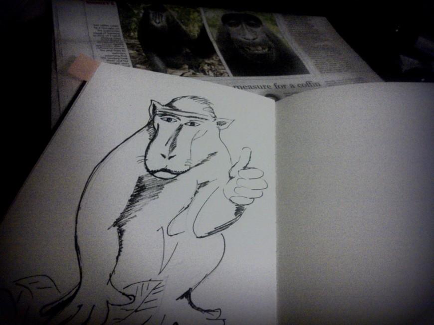 Crested Black Macque Ape